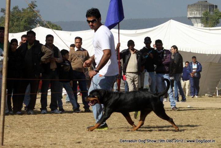 rottweiler,sw-73,, Dehradun Dog Show 2012, DogSpot.in