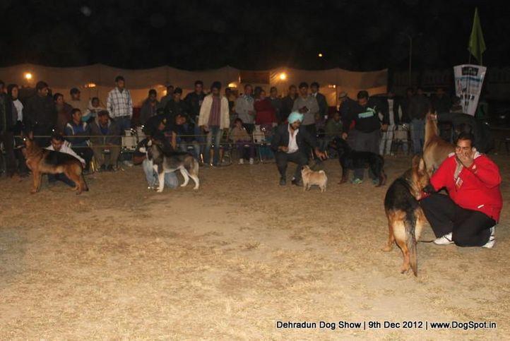 line up,sw-73,, Dehradun Dog Show 2012, DogSpot.in