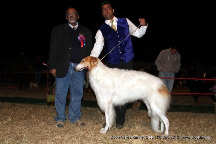 borzoi,sw-103,, Dehradun Dog Show 2013, DogSpot.in