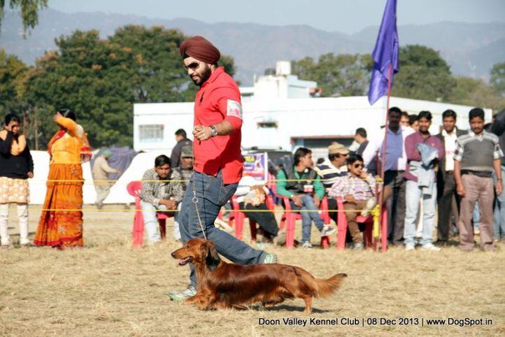 dachshund,sw-103,, Dehradun Dog Show 2013, DogSpot.in