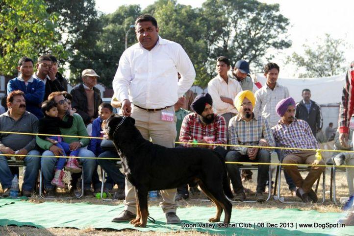 sw-103,, Dehradun Dog Show 2013, DogSpot.in