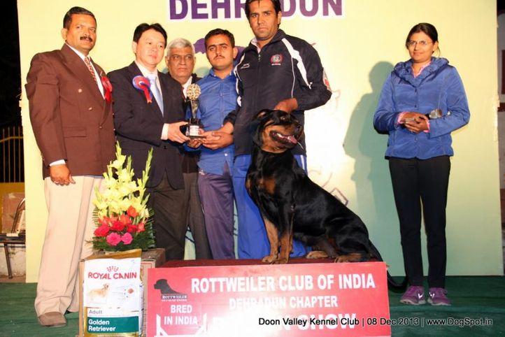rottweiler,rottweiler lineup,sw-103,, Dehradun Dog Show 2013, DogSpot.in