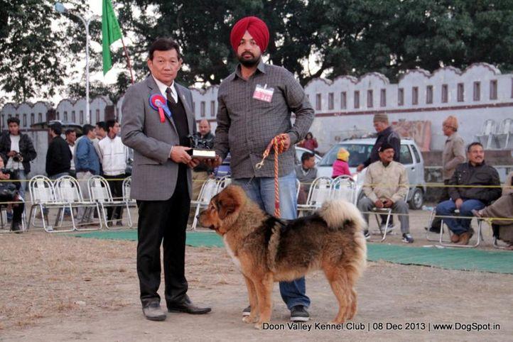 sw-103,tibetan mastiff,, Dehradun Dog Show 2013, DogSpot.in