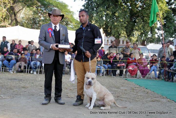 american staffordshire terrier,sw-103,, Dehradun Dog Show 2013, DogSpot.in