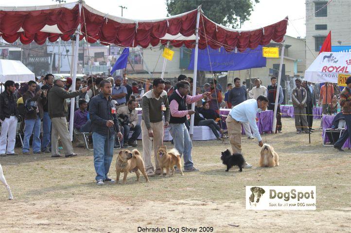 Group Judging,Lhasa Apso,Sharpie,Spitz,Utility Group,, Dehradun Dog Show, DogSpot.in
