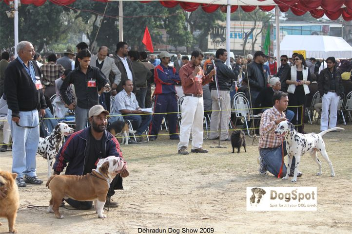 BullDog,Dalmatian,Group Judging,Utility Group,, Dehradun Dog Show, DogSpot.in