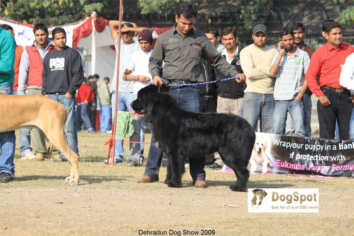 Group Judging, Working Group, Dehradun Dog Show, DogSpot.in