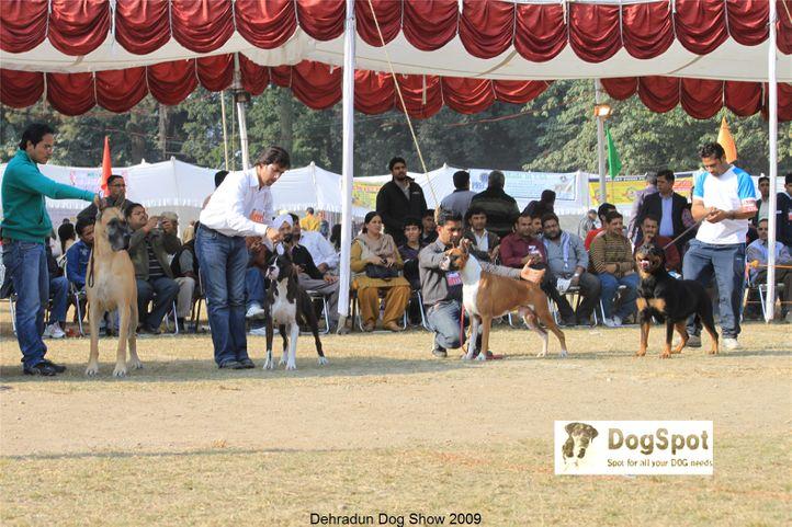 Boxer,Great Dane,Group Judging,Rottweiler,Working Group,, Dehradun Dog Show, DogSpot.in