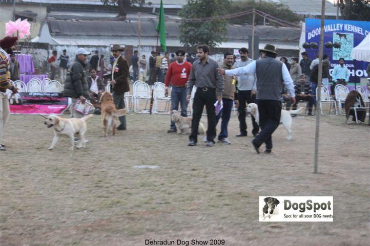 Group Judging,Gundog Group,, Dehradun Dog Show, DogSpot.in