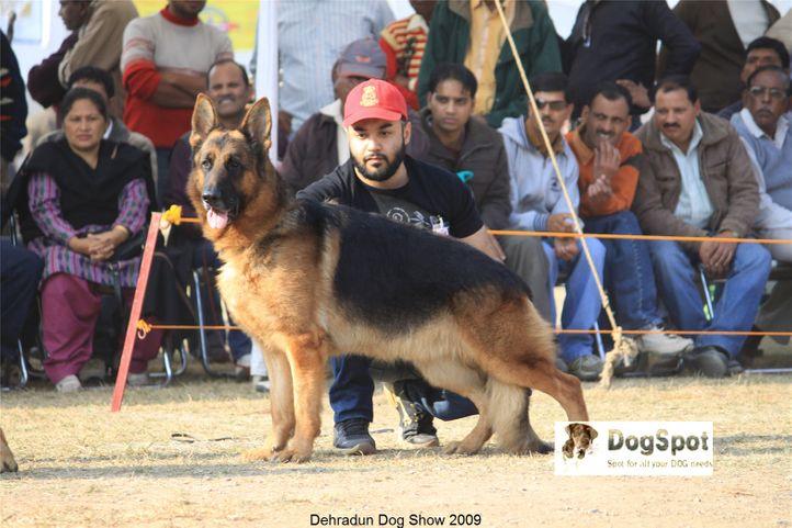 Alsatian,GSD,Nexx,, Dehradun Dog Show, DogSpot.in