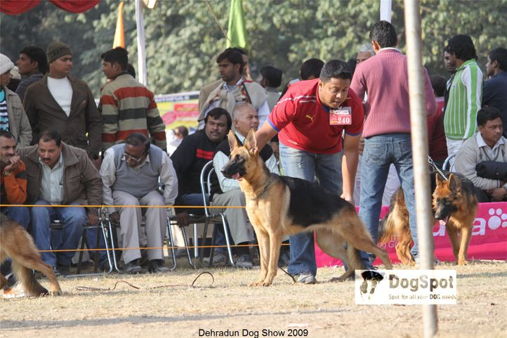 Alsatian,GSD,kimmy,, Dehradun Dog Show, DogSpot.in