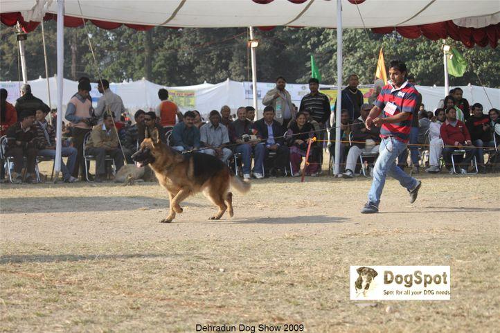 Alsatian,GSD,Zapp,, Dehradun Dog Show, DogSpot.in