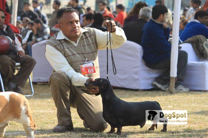 dachshund,Hounds,, Dehradun Dog Show, DogSpot.in