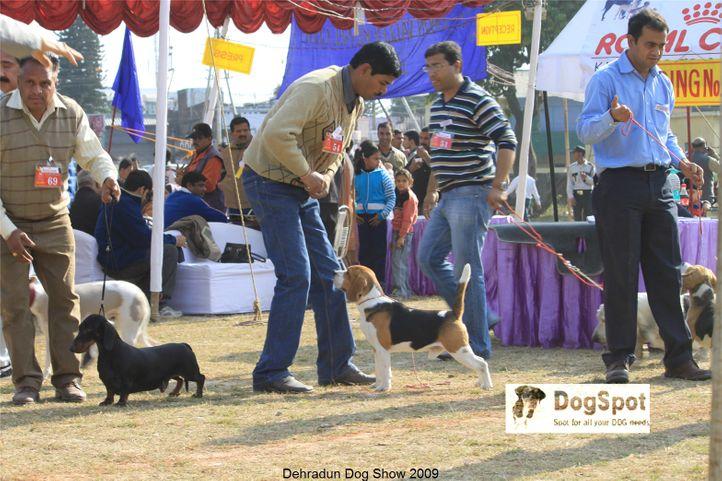 Group Judging,Hounds,, Dehradun Dog Show, DogSpot.in