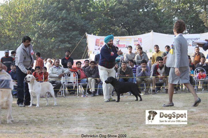 Labrador Retriever,, Dehradun Dog Show, DogSpot.in