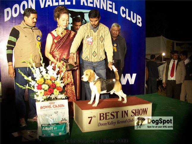 Beagle,BIS,Line up,, Dehradun Dog Show, DogSpot.in