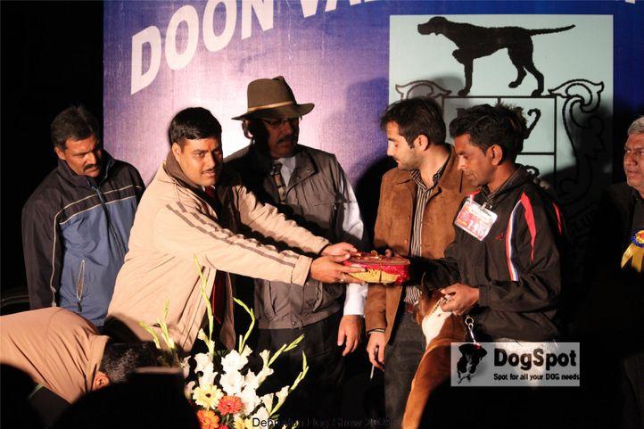 b,BIS,Boxer,Line up,, Dehradun Dog Show, DogSpot.in