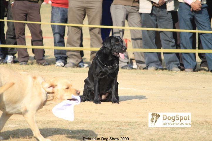 Enakshi Kennels,Obedience Show,, Dehradun Dog Show, DogSpot.in