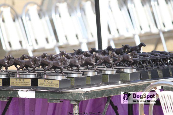Mastiff, Dehradun Dog Show, DogSpot.in