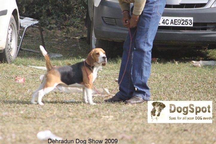 , Dehradun Dog Show, DogSpot.in