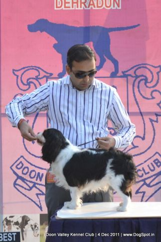 ex-1,king charles,sw-47,, MY EXOTIC WORLD LICENCE TO WIN, Cavalier King Charles Spaniel, DogSpot.in