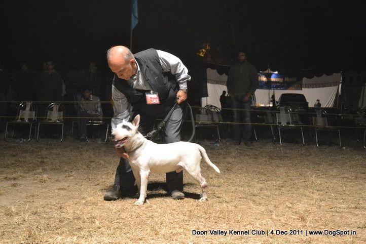 ,sw-47,terrier,, Dehradun Dog Show, DogSpot.in