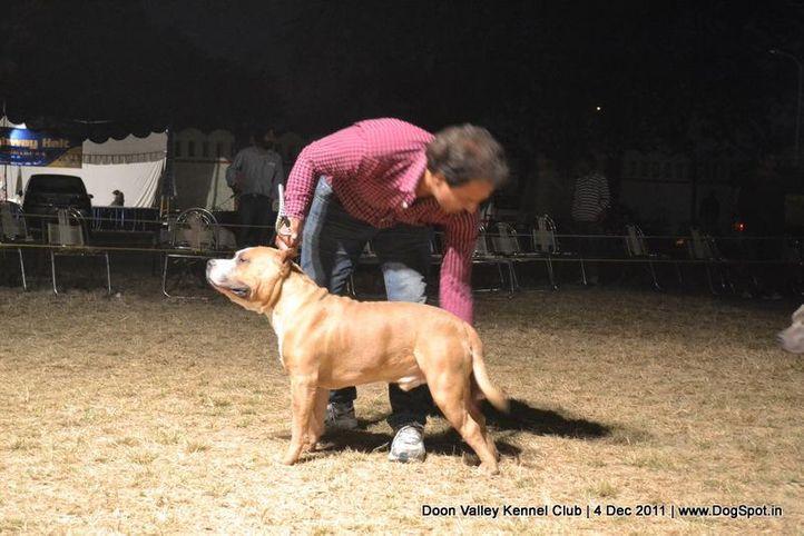 sw-47,terrier,, Dehradun Dog Show, DogSpot.in