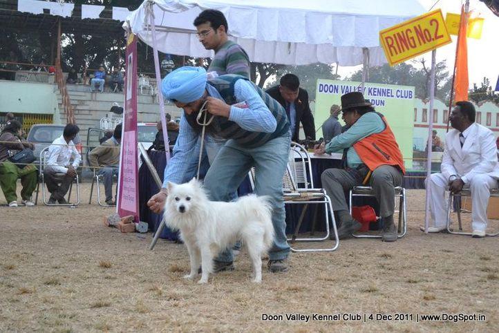 spitz,sw-47,, Dehradun Dog Show, DogSpot.in