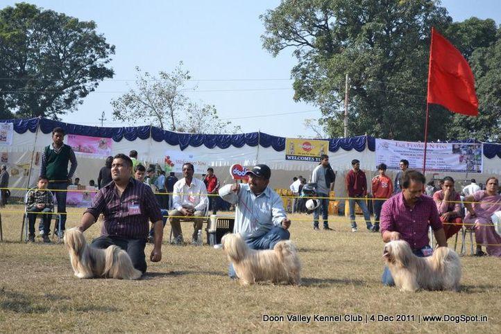 lhasa,sw-47,, Dehradun Dog Show, DogSpot.in