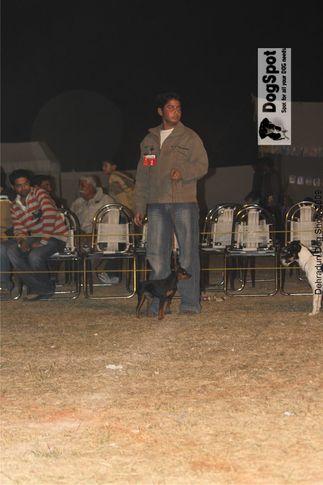 Junior Handler,, Dehradun Dog Show, DogSpot.in
