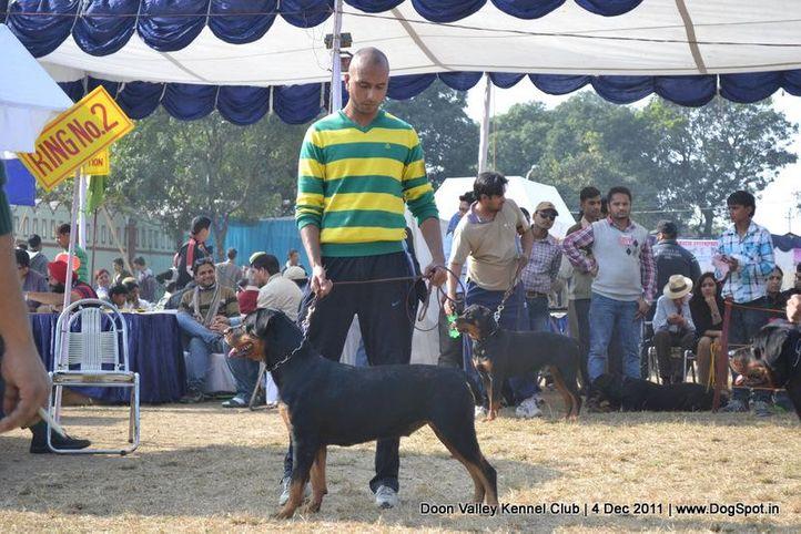 rottweiler,sw-47,, Dehradun Dog Show, DogSpot.in