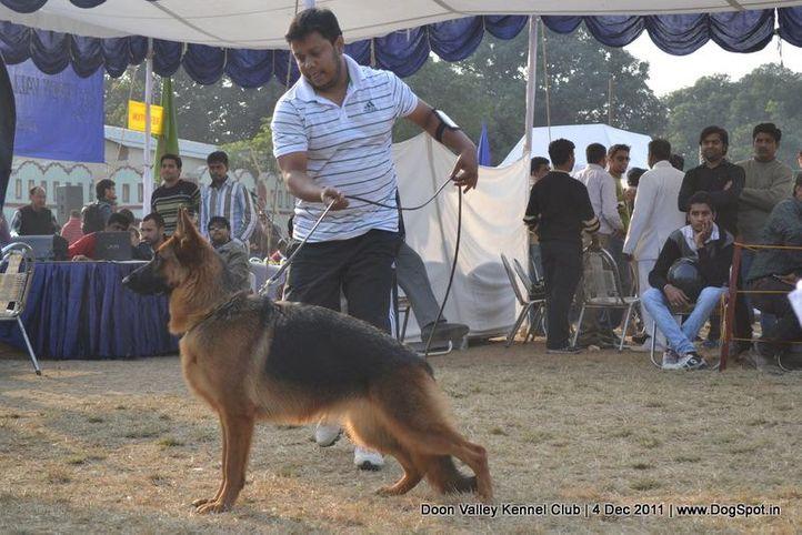 gsd,sw-47,, Dehradun Dog Show, DogSpot.in