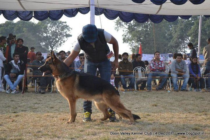 ex-224,gsd,sw-47,, CRONOS VOM EXTERNSTEIN, German Shepherd Dog, DogSpot.in