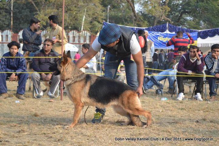 ex-228,gsd,sw-47,, FRONTLINE'S FIPPSI, German Shepherd Dog, DogSpot.in