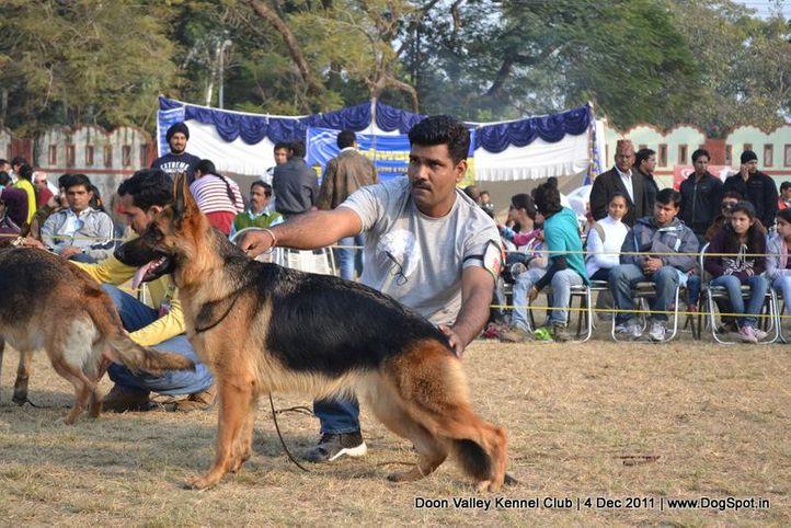 ex-233,gsd,sw-47,, HEENA OF BHALOTHIA, German Shepherd Dog, DogSpot.in