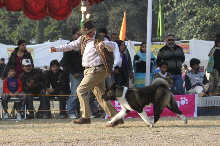 Akita,, Dehradun Dog Show, DogSpot.in