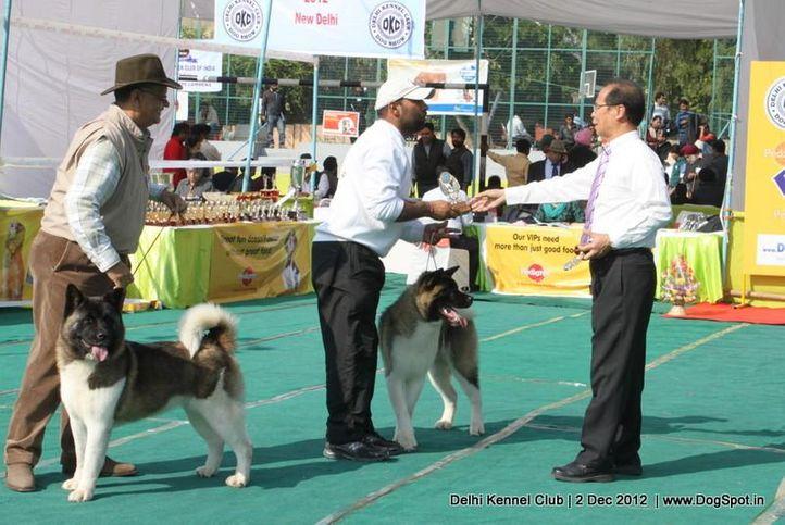 akita,judge,sw-67,, Delhi Dog Show 2012, DogSpot.in