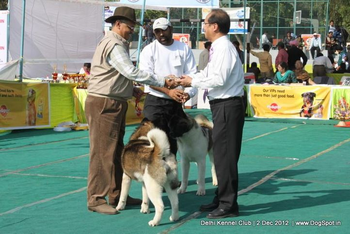 akita,judge,sw-67,, Delhi Dog Show 2012, DogSpot.in