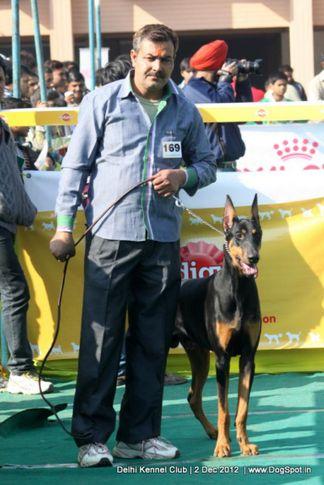 dobermann,sw-67,, Delhi Dog Show 2012, DogSpot.in