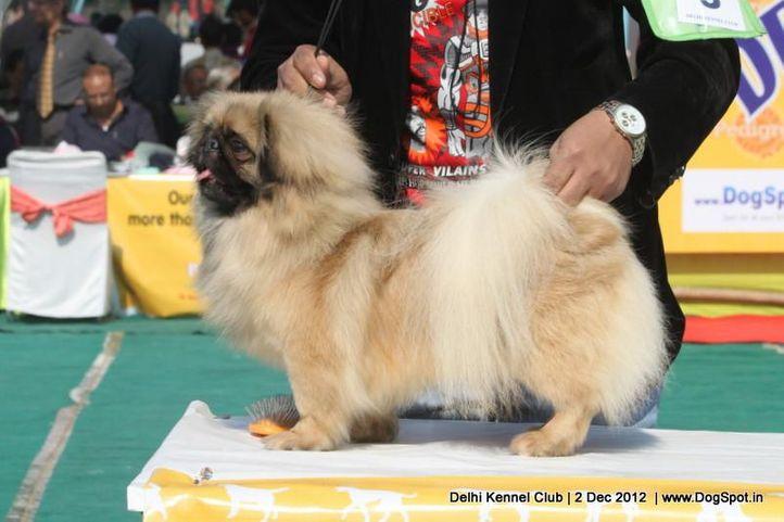 ex-5,pekingese,sw-67,, KESHATRA'S JOJO, Pekingese, DogSpot.in