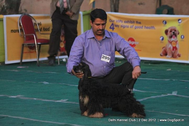 cocker spaniel,ex-299,sw-67,, Delhi Dog Show 2012, DogSpot.in