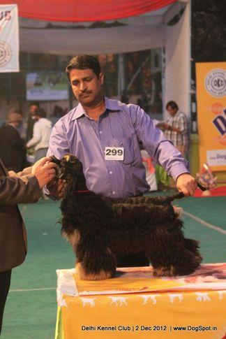 cocker spaniel,ex-299,sw-67,, Delhi Dog Show 2012, DogSpot.in