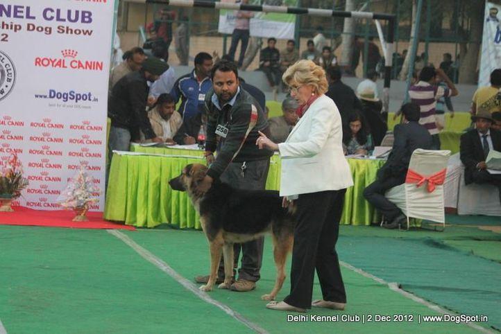 ex-258,sw-67,tibetan mastiff,, SIMBA, Tibetan Mastiff, DogSpot.in