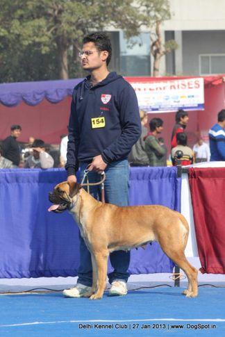 bull mastiff,ex-154,sw-79,, OLIMPIA OF SHANKY, Bullmastiff, DogSpot.in