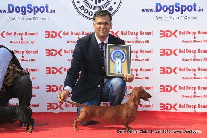 dachshund standard,sw-79,, Delhi Dog Show 2013, DogSpot.in