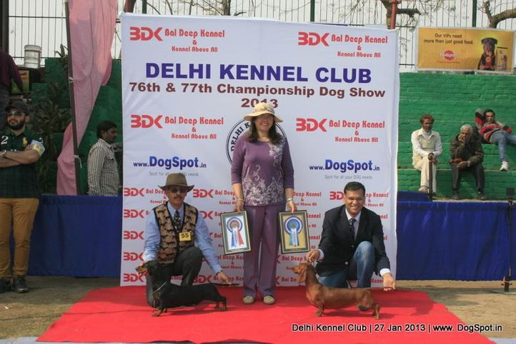 dachshund standard,ex-55,sw-79,, CHANJI'S GARDENIA, Dachshund Standard- Smooth Haired, DogSpot.in