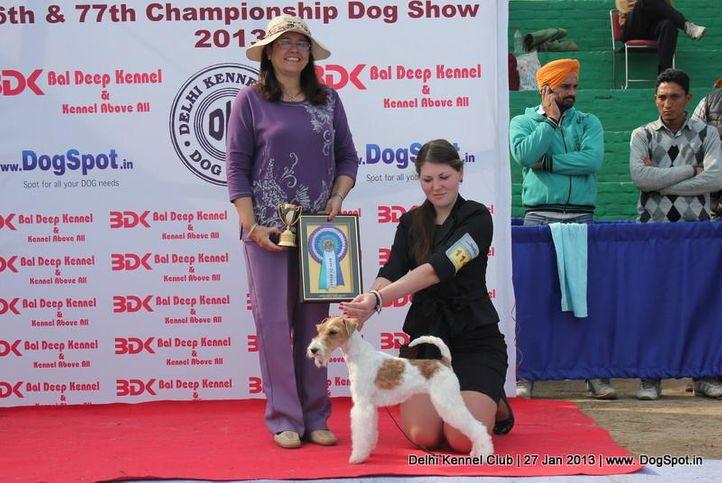 fox terrier,ex-114, sw-79, FIERY FOX SAFARI, Fox Terrier- Weired Hair, DogSpot.in