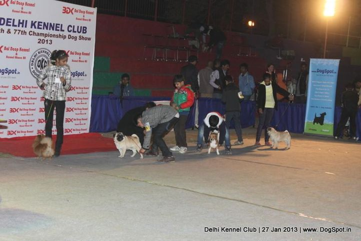 child handling,sw-79,, Delhi Dog Show 2013, DogSpot.in