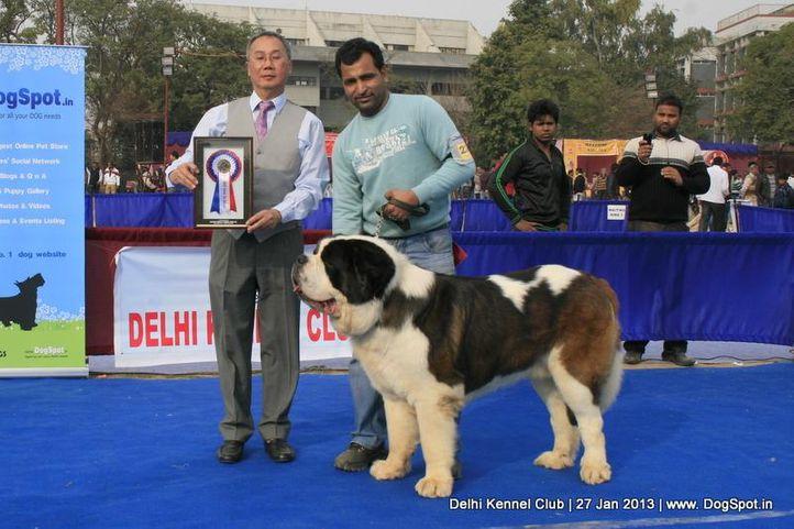stbernard,sw-79,, Delhi Dog Show 2013, DogSpot.in