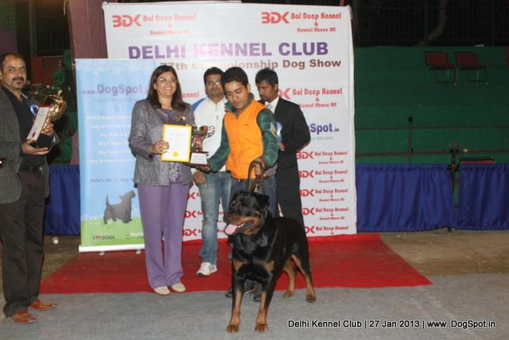 line up,sw-79,, Delhi Dog Show 2013, DogSpot.in